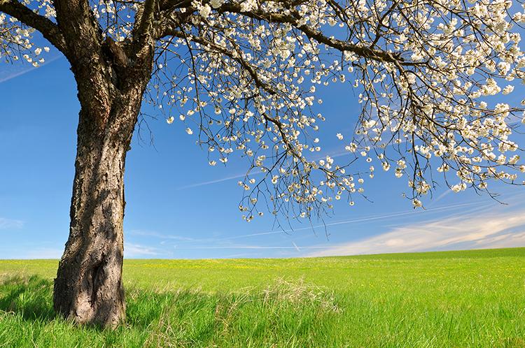spring-time-home-checklist